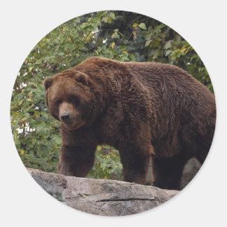 grizzly-bear-004 pegatinas redondas