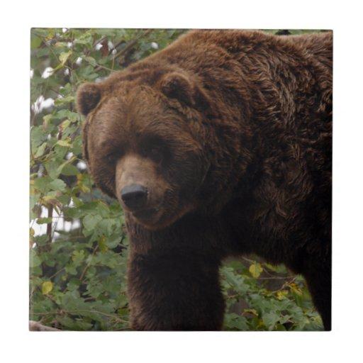 grizzly-bear-005 azulejo cuadrado pequeño