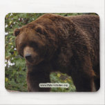 grizzly-bear-005 mouse pad