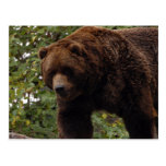 grizzly-bear-005 postcards