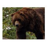 grizzly-bear-005 tarjetas postales