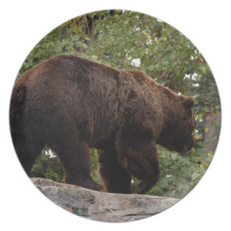 grizzly-bear-006 plate