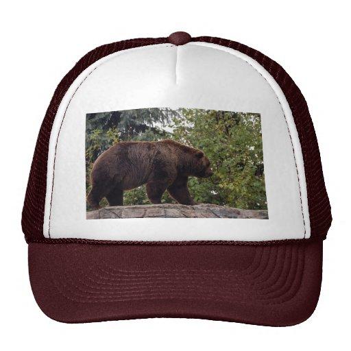 grizzly-bear-007 gorros