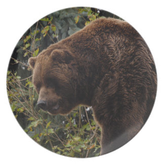 grizzly-bear-009 plates