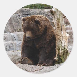 grizzly-bear-010 classic round sticker