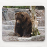 grizzly-bear-010 mouse pad