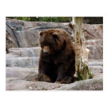 grizzly-bear-010 postales