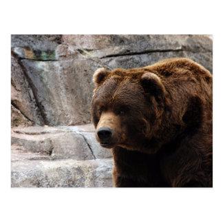 grizzly-bear-011 postcard