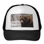 grizzly-bear-012 gorra