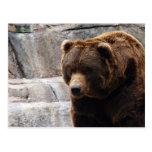 grizzly-bear-012 tarjetas postales