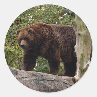 grizzly-bear-013 classic round sticker