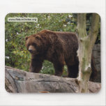 grizzly-bear-013 mouse pad