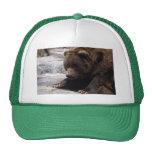 grizzly-bear-014 gorras