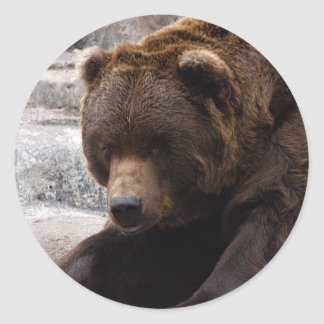 grizzly-bear-016 classic round sticker