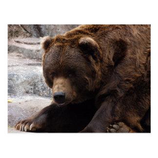 grizzly-bear-016 postcard