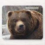 grizzly-bear-017 mouse pad