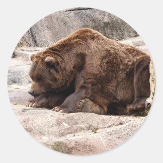 grizzly-bear-018 classic round sticker
