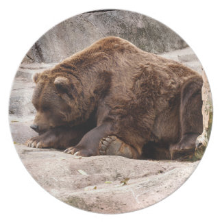 grizzly-bear-018 dinner plates