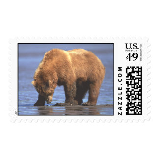 Grizzly Bear 2 Postage
