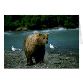 Grizzly Bear beside wilderness river Card