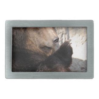 Grizzly Bear Boar Belt Buckle