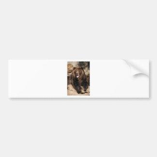 Grizzly Bear Boar Bumper Sticker