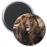 Grizzly Bear Boar Fridge Magnet
