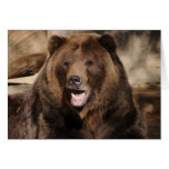 Grizzly Bear Boar Greeting Cards