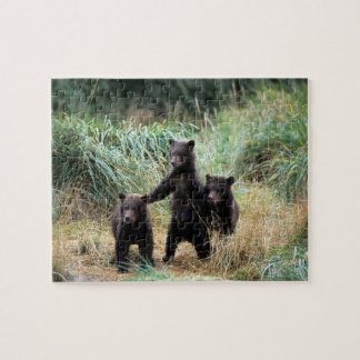 Grizzly bear, brown bear,  cubs in tall grasses, jigsaw puzzles
