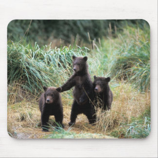 Grizzly bear, brown bear,  cubs in tall grasses, mouse pad