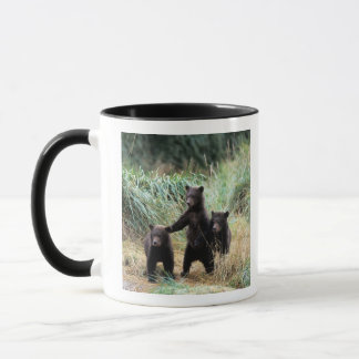 Grizzly bear, brown bear,  cubs in tall grasses, mug