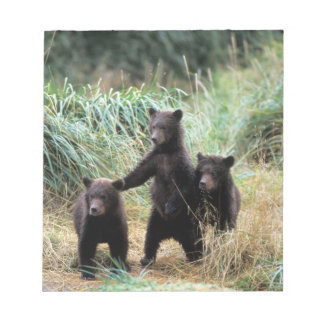 Grizzly bear, brown bear,  cubs in tall grasses, notepad
