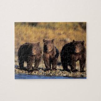 Grizzly bear, brown bear, cubs, Katmai National Jigsaw Puzzles