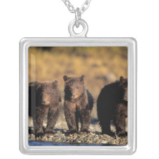 Grizzly bear, brown bear, cubs, Katmai National Silver Plated Necklace