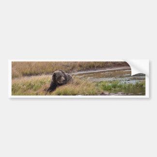 Grizzly Bear Bumper Sticker