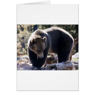 Grizzly Bear Card