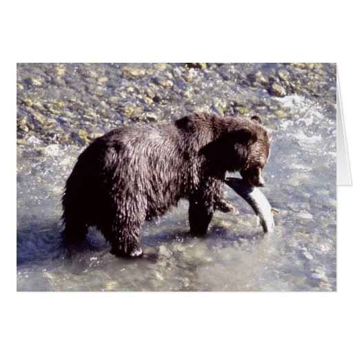 Grizzly bear catching a fish greeting card