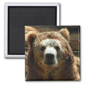 Grizzly Bear Chilling Magnet