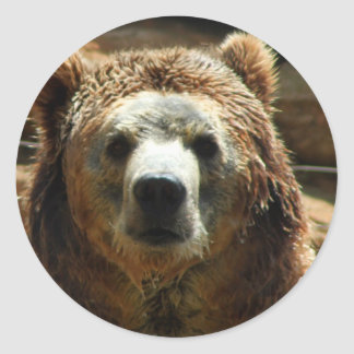 Grizzly Bear Chilling Round Stickers