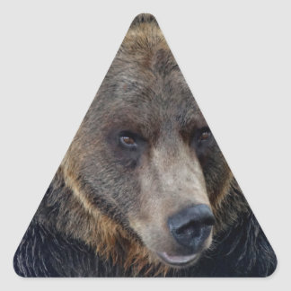 Grizzly Bear Close-up Triangle Sticker