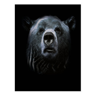 Grizzly Bear Confused Face Animal Postcard