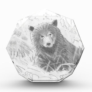 Grizzly Bear Cub Drawing Awards