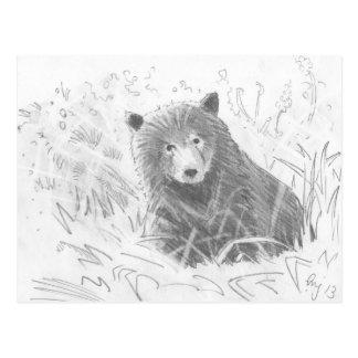 Grizzly Bear Cub Drawing Postcard