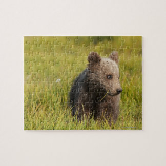 Grizzly Bear Cub Jigsaw Puzzle
