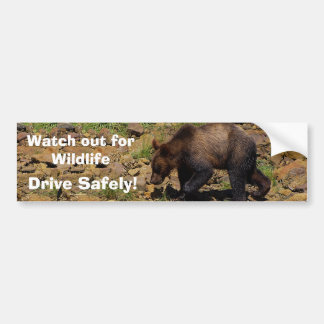 GRizzly Bear Cub Wildlife Supporter Bumper Sticker