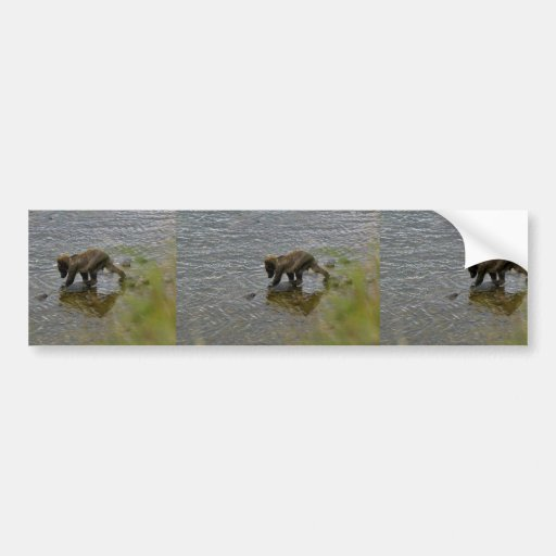 Grizzly bear cubs bumper stickers