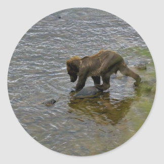 Grizzly bear cubs classic round sticker