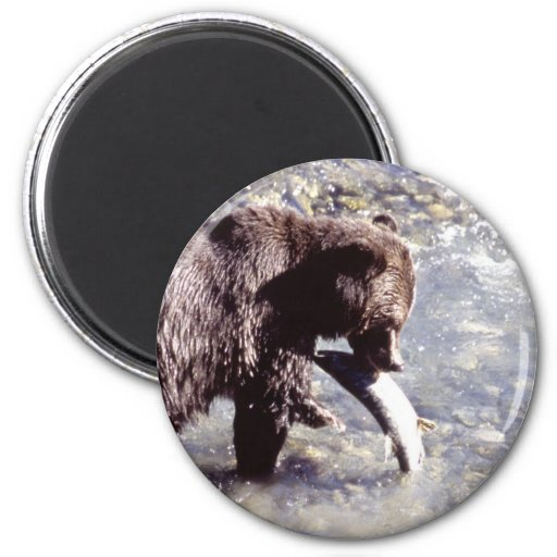 Grizzly Bear Eating a Salmon 2 Inch Round Magnet