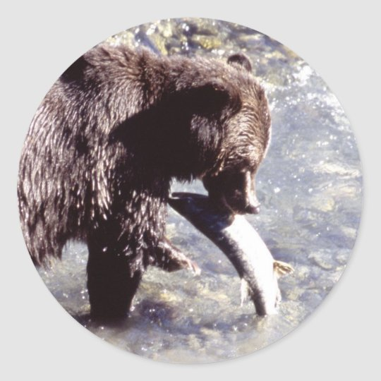 Grizzly Bear Eating a Salmon Classic Round Sticker