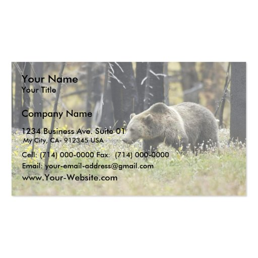 Grizzly Bear in Field at Yellowstone National Park Double-Sided Standard Business Cards (Pack Of 100)